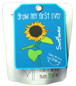 SUNFLOWER (GIRASOL) -GROW MY FIRST