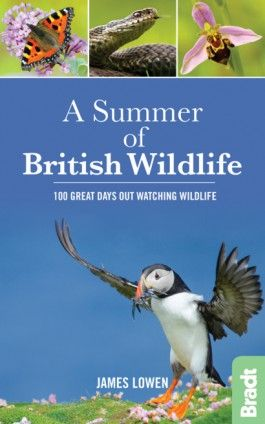 SUMMER OF BRITISH WILDLIFE, A -BRADT ON BRITAIN -BRADT
